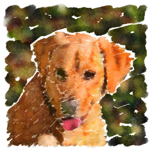 Lady Arwen, a Golden Retriever / Yellow Lab blend, makes for a nice subject in this watercolor rendering of a photo John took in her backyard.
