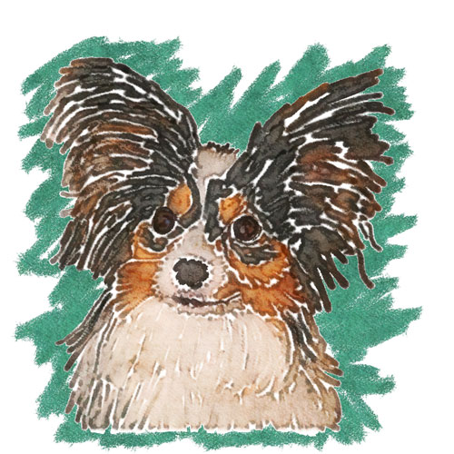 This head shot of Didi was done using a watercolor technique and was used for a 'Dogmother's Day' card.  John worked hard to capture Didi's expression as well as her distinctive ears in creating this piece of art.