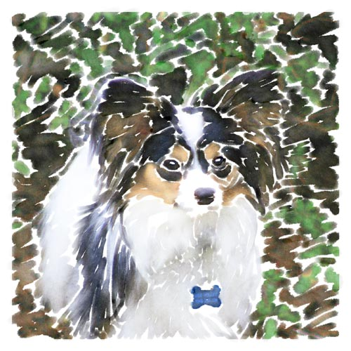 John created this digital watercolor image of his Papillon Didi to refine his skill with the technique, using various sizes of brushes and matching paint strokes to the original image's contours.  Contrasted with his first watercolor image of Didi, this one features an increased level of detail and finer curves, but less bold colors.