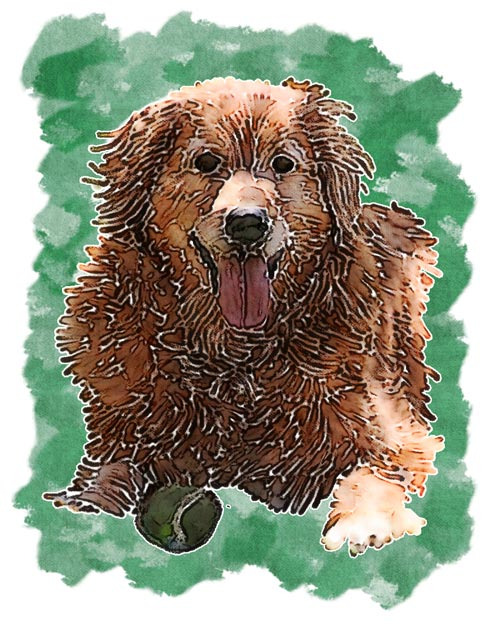 John created this artistic rendering of Golden Retriever Emma Marie Woodhouse as a memorial of her passing.