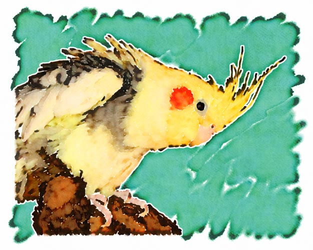 The vivid yellow patches on Kain's pied plumage worked very well for John in creating this piece of art based upon one of his cockatiels.  Though not done with the level of detail as his Rydia piece as Kain's splotchy plumage didn't require the tiny clusters of coloration that Rydia's pearling did, John really likes the way his feathers along his back and wing look in this piece.