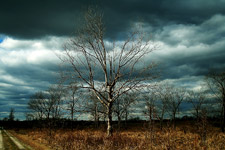 Menacing Clouds on a Skeletal Tree at Occoquan