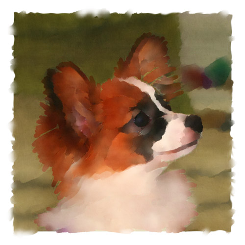 Portia, a young Papillon, is one of Didi's friends.  Here, John has rendered this piece of artwork by applying several layers of paint strokes above the original photograph.