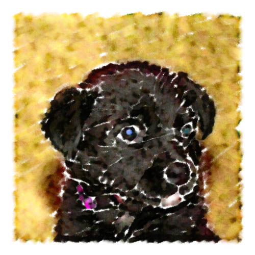 Tiny Sasha, pictured here as a 8-week-old puppy mix of Labrador, German Shepherd, and Rottweiler, makes for a nice watercolor-style portrait.